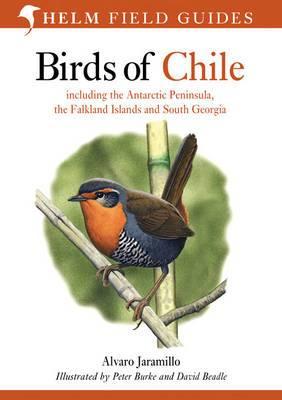 b2ap3_thumbnail_Birds-of-Chile.jpg