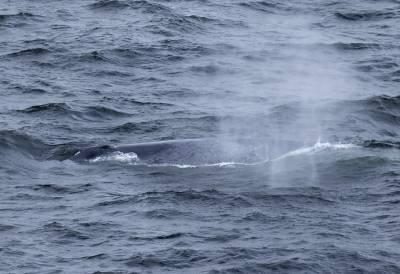 b2ap3_thumbnail_Blue-Whale-off-Newfoundland-220519-1280-JJC_20190613-090523_1.jpg