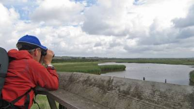 b2ap3_thumbnail_Checking-out-the-waders-at-Farlington-Marshes.jpg