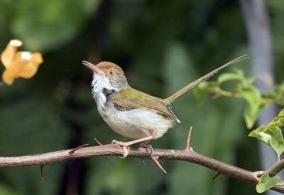 b2ap3_thumbnail_Common-Tailorbird-Singapore-1000-160318-JJC.jpg