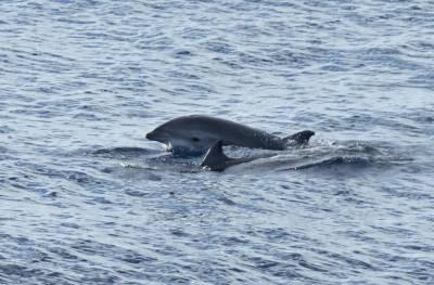 b2ap3_thumbnail_Frasers-Dolphin-Savu-Sea-110318-JJC.jpg