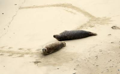 b2ap3_thumbnail_Harbour-Seals-near-Sumborough-Head.jpg
