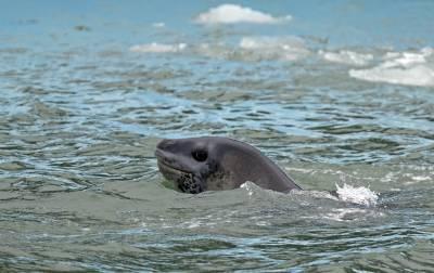 b2ap3_thumbnail_Leopard-Seal-Laguna-San-Rafael-JC-800.jpg