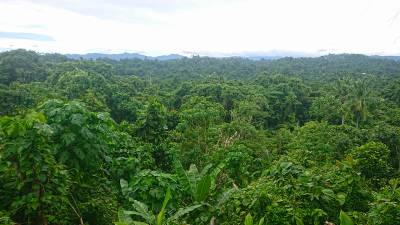 b2ap3_thumbnail_Madang-Forest-overlook-Jan-2020-JJC.jpg