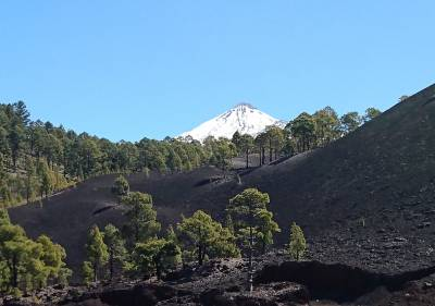 b2ap3_thumbnail_Mt-Teide-and-Canary-Pine-Zone-March-2016-JJC.jpg