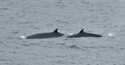b2ap3_thumbnail_Sei-Whales-2-exiting-Chilean-Fjords-JJC.jpg