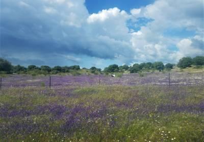 b2ap3_thumbnail_The-Colour-Purple-Clare-Gower.jpg