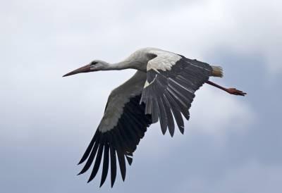 b2ap3_thumbnail_White-Stork-Extremadura-2-May-2018-JJC-1280.jpg