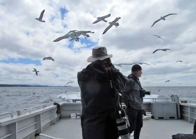 b2ap3_thumbnail_White-capped-Albatross-escort-Aurora-charters-pelagic-Nov-2015.jpg