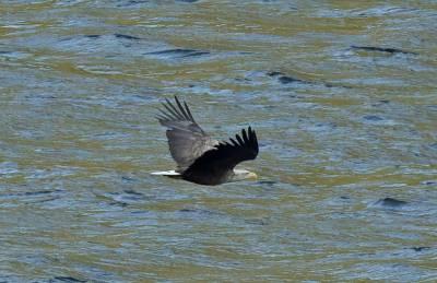 b2ap3_thumbnail_White-tailed-Eagle-Lysfjord-JJC-800.jpg