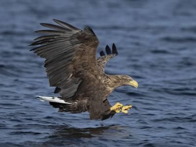 b2ap3_thumbnail_White-tailed-Eagle-adult-Mull-270920-JJC-1280.jpg