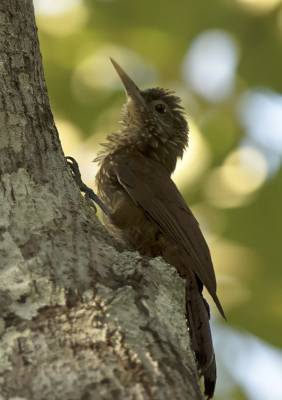b2ap3_thumbnail_Zimmers-Woodcreeper-January-Lake-JJC.jpg